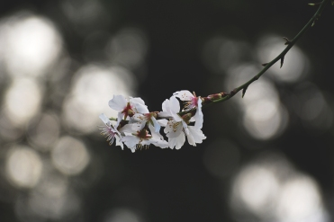 Flor de almendro - Marta Isern